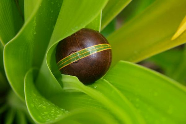 Pacific Perfumes Solid Perfume Forest of Ferns